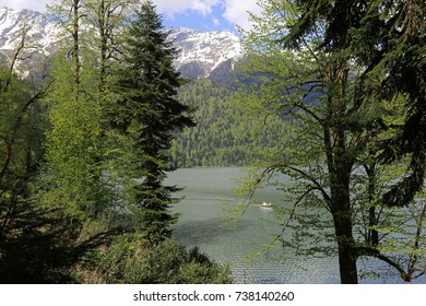 Trees on Lake Ritsa in Abkhazia