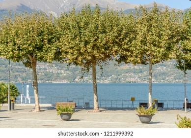 trees on lakeside of Como lake at touristic village,