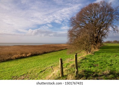 Trees on the Mirnser cliff near the small hamlet Rijs in the Dutch province Friesland