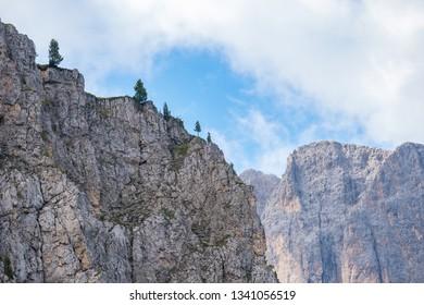 Trees on a mountain ridge