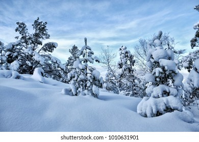 Trees on a mountain and a lot of snow in Norway
