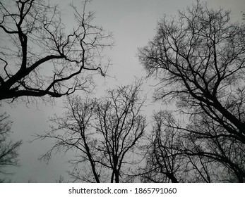 trees on a  november evening
