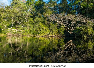 Trees on a river in Cuyabeno Natural reserve, Amazon Rainforest, Ecuador