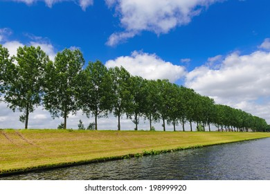 Trees on the river dam, which was built along the Maas, North Brabant, The Netherlands