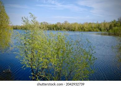 The trees on river Yenisey, Krasnoyarsk, Siberia.