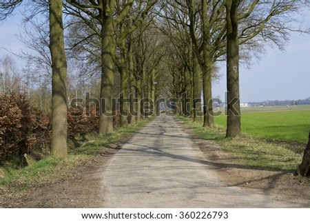 trees on road