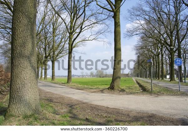 Trees on road