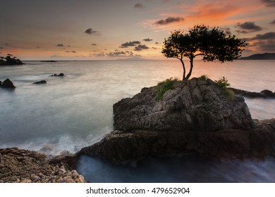 trees on a rock in the middle of the sea,,locations teluk kiluan lampung indonesia