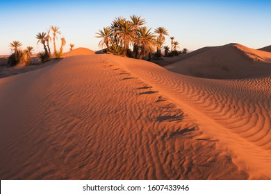 Trees on the Sahara desert, Merzouga, Morocco Colorful sunset in the desert above the oasis with palm trees and sand dunes. Beautiful natural background -African oasis. Global warming in Africa