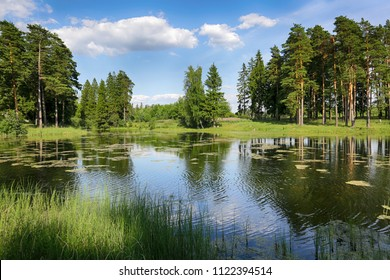 Trees on the shore of a forest lake with reflection in the water on a sunny summer day