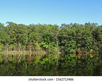 Trees on the shore of North Shattuck Lake, New Auburn, Wisconsin