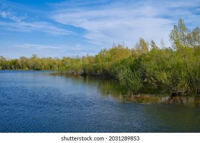The trees on shore of river Yenisey, Krasnoyarsk,  Siberia, Russia.