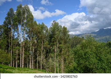 Trees on the side of a hill in El Allende, Asturias Spain.