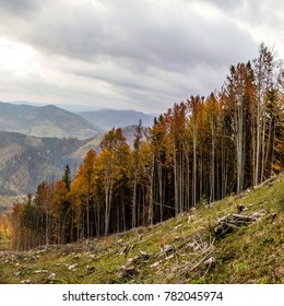 Trees on the slope of the mountain. Colorful autumn.