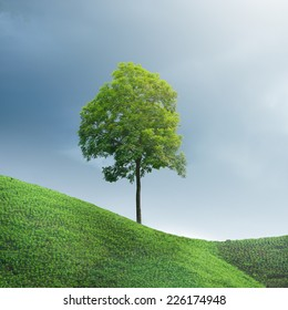 Trees on a steep hill. concept of struggle and endurance.