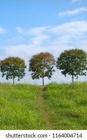 Trees on the top of hill with path of green trampled grass and blue sky