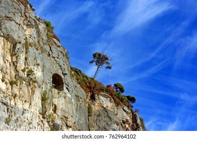 Trees on top of the rocky coast of Palmaria Island