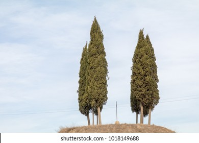 trees on top of a small hill in tuscany