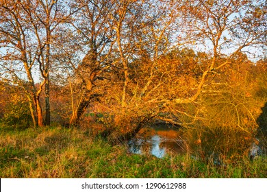 Trees on Umia river shore at winter