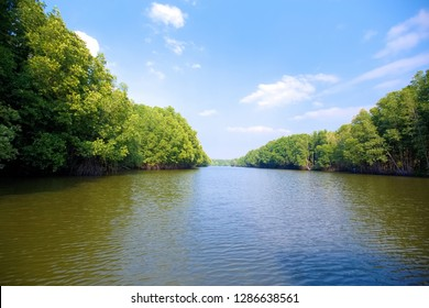 Trees on the waterfront of the mangrove forest