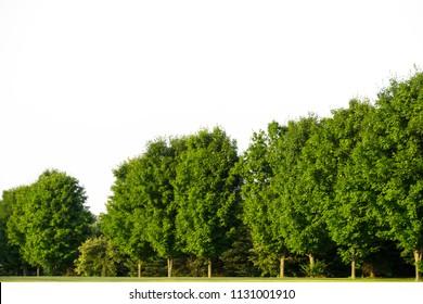 trees on white background