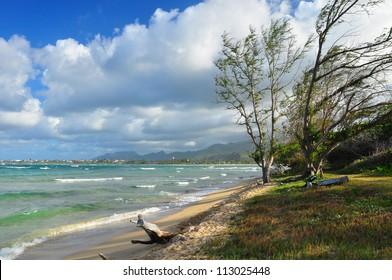 Trees on a windy tropical coast