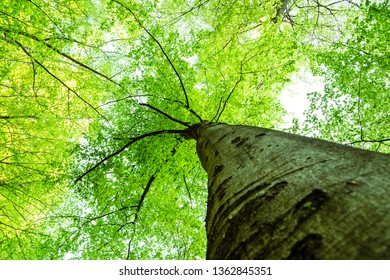 Trees are our oxygen producer