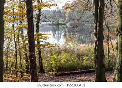 trees overlooking a lake in autumn in overcast sky, Germany