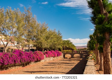 Trees, Palm trees and Flowers with Stone foot bridge and Mountains in the background in Fuerteventura