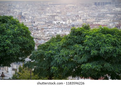 Trees with Paris in the background