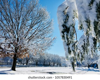 Trees in park after snowfall, winter landscape.