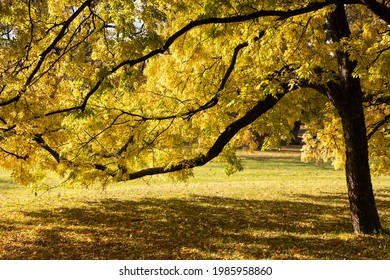 Trees in the park of Bad Homburg in autumn, Hessen, Germany