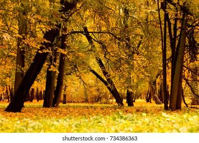 Trees in a park by an autumn day with yellow leaves and grass around covered by foliage.