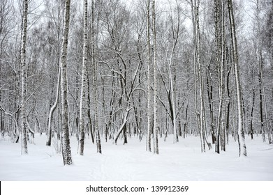 Trees in a park covered with fresh snow.