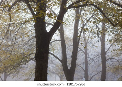 Trees in park at foggy morning