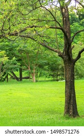 Trees in the park with green grass on the ground
