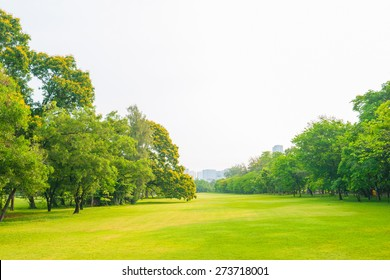 Trees in a park with green lawn, park under sunny light