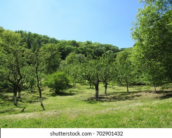 Trees in the park on a summer day