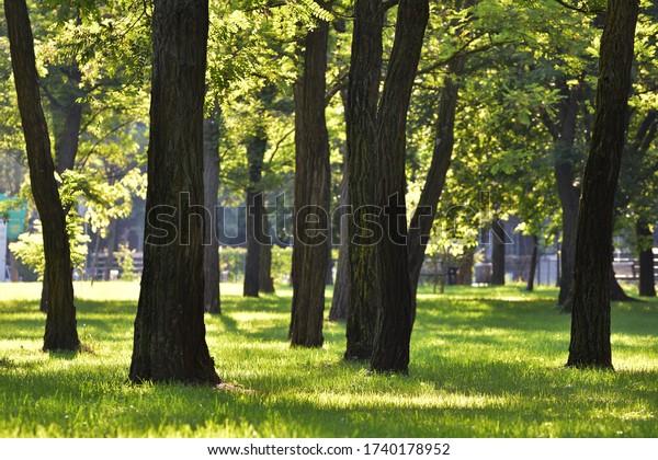 trees-park-summer-600w-1740178952.jpg