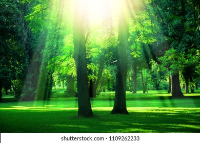 Trees in the park at summertime with strong sunlight from above
