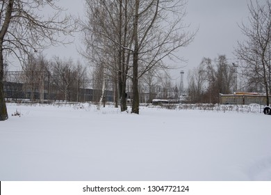 The trees in the Park. Winter weather, snow.