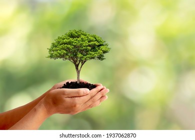 Trees are planted on the ground in human hands with natural green backgrounds, the concept of plant growth, and environmental protection.