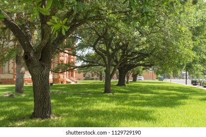 trees planted in a row on a courthouse lawn