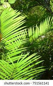 Trees and plants of Daintree Rainforest,  near Port Douglas, Queensland, Australia