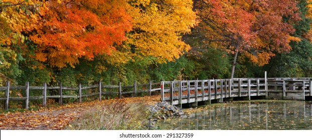 Trees Positively Ablaze With Color During Autumn In The Park, Walking Path, Fence And Pond, Sharon Woods, Southwestern Ohio, USA