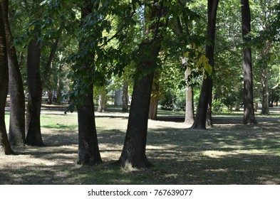 Trees in a public park in summer showing a peace and calm atmosphere