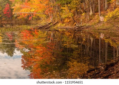 Trees with a red bright autumn foliage on the shore of a deserted lake.  USA. Maine.