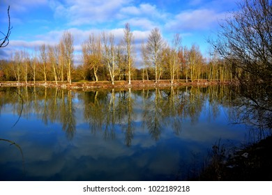 Trees reflected in a calm lake
