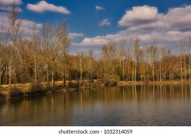 trees reflected in a lake