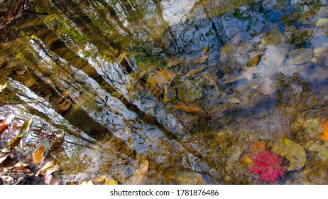 Trees reflected in shallow stream waters with autumn leaves at the bottom